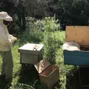 თაფლი სოფელი მერხეულიდან (აფხაზეთი)